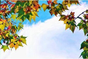 北林的秋-北京林业大学校报电子版