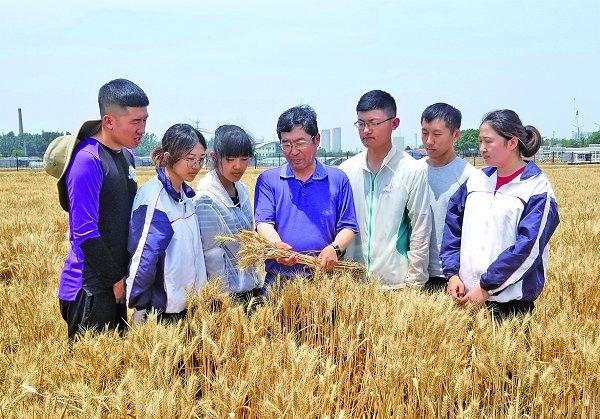 山农30、山农29连续刷新全国冬小麦单产最高