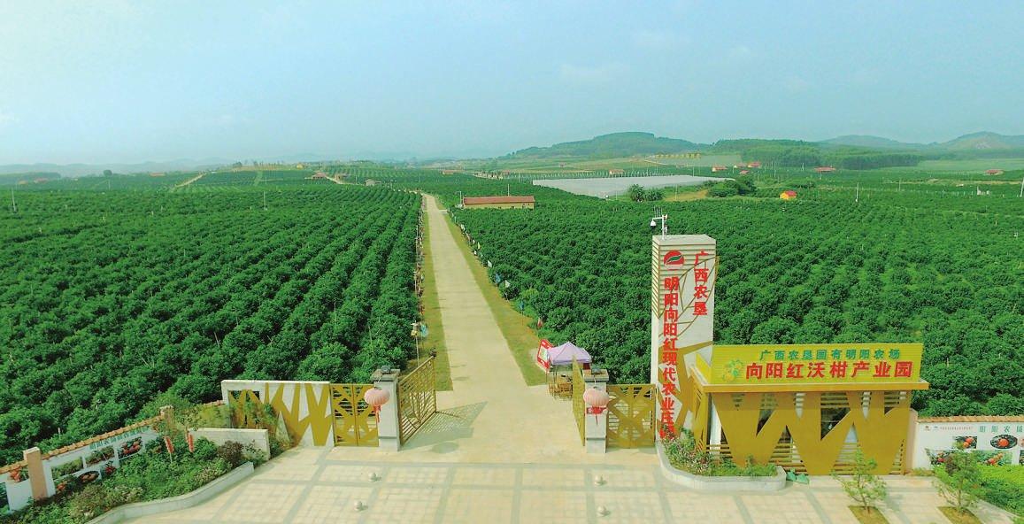 直挂云帆济沧海 ———广西农垦集团推进高质量发展纪实