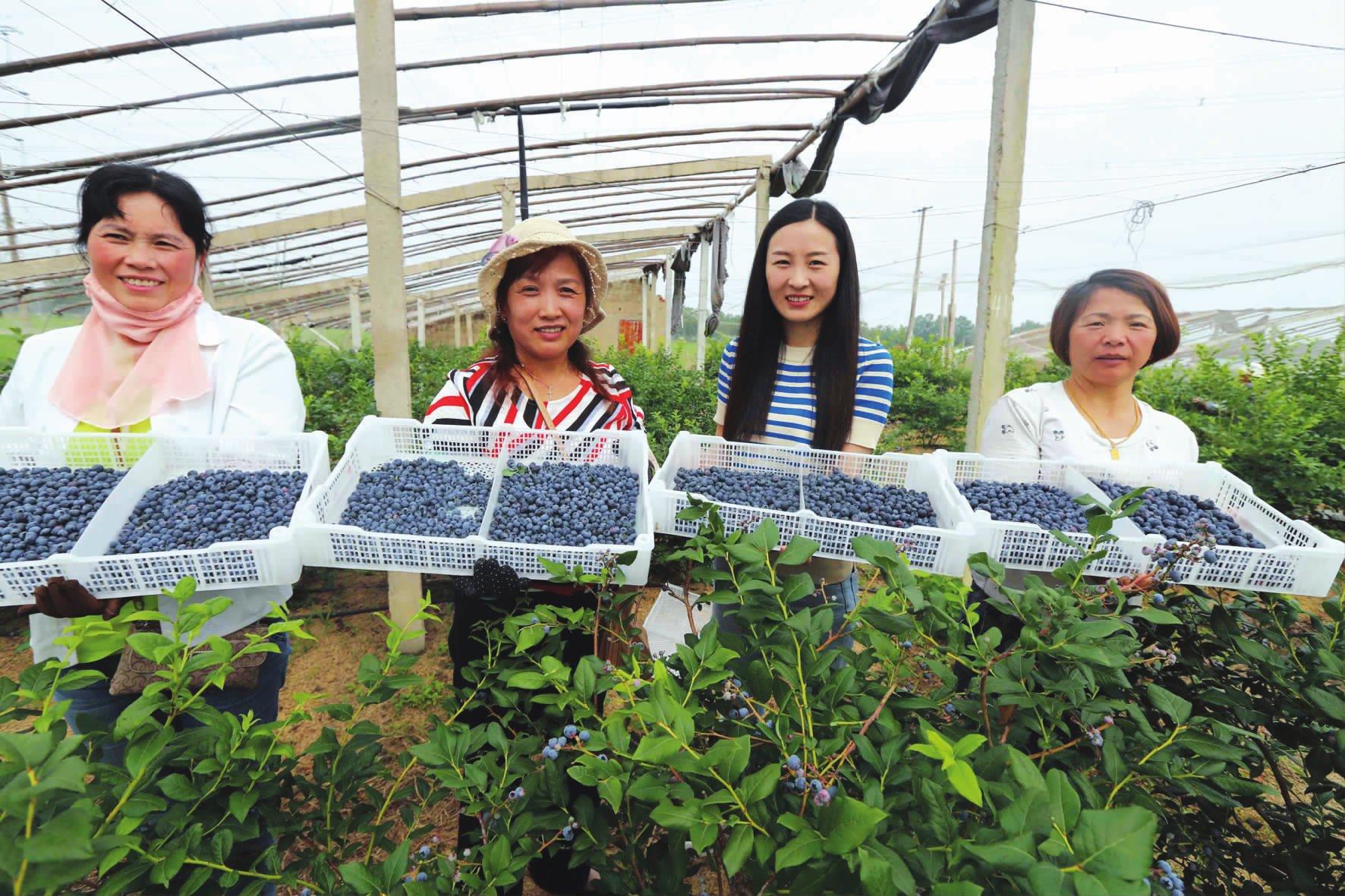 蓝莓种植带民富