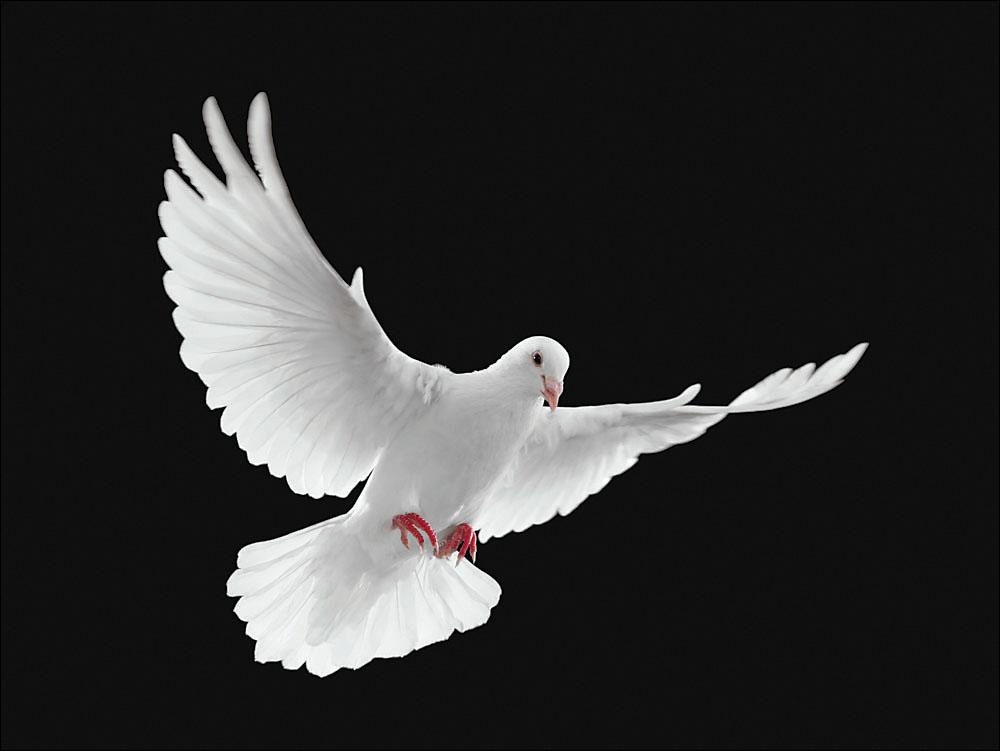 动物鸽鸽子鸟兔子1000_7515个月的鸟类图片